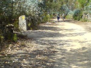 Raus aus Pontevedra und nach Caldas de Reis geht es heute
