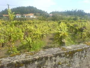 Die vorletzte Etappe schon von Caldas de Reis nach Padron